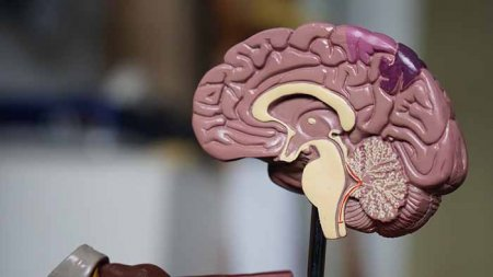 brain Interpersonal neurobiology ipnb