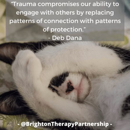 "Image of a kitten with paws over face. Quote reads ""Trauma compromises our ability to engage with others by replacing patterns of connection with patterns of protection"" - Deb Dana on Polyvagal Theory"