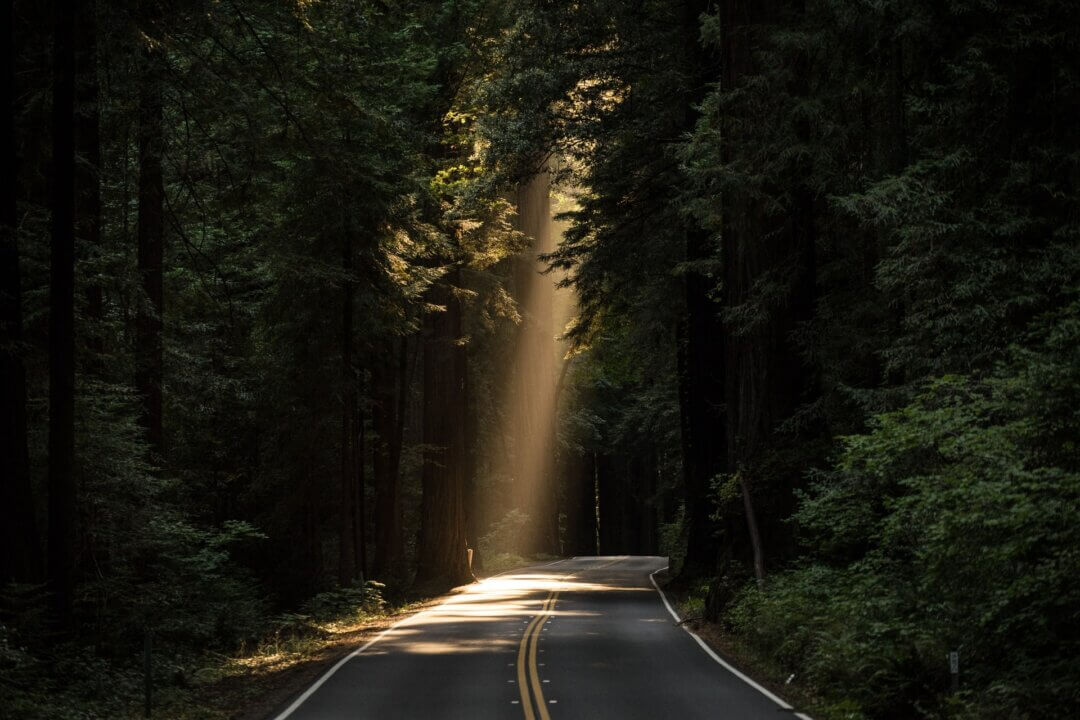 Image of a road through a forest with a light shining down at the end. As well as excitement for lockdown ending therapy clients may feel anxiety over weight gained.